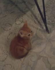 Kreta Kätzchen ...